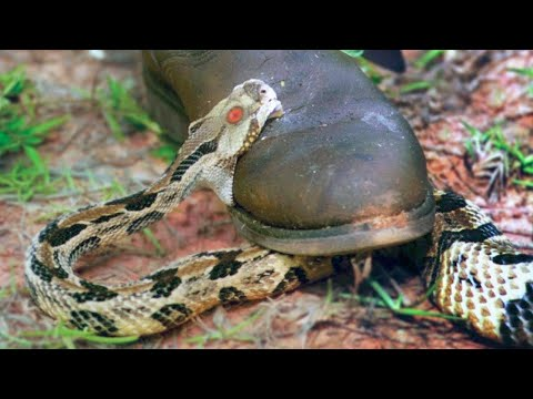15 Terrifying Snakes That Will Probably Kill You