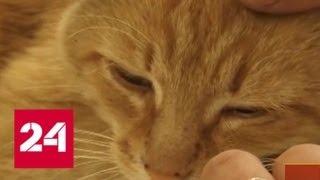 Кто подделывает лекарства и вакцины для животных? - Россия 24