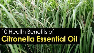 10 Citronella Essential Oil Benefits and its Uses