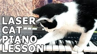 Cat and Kitten Play Piano With Laser Pointer 2019