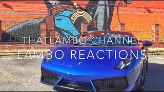 Lambo Reactions