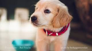 Puppy Love - Bad Snacks [BGM/배경음악]
