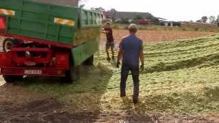 Kukurydza 2015 ||Gospodarstwo Rolne Płonko|| ||Zts 16245|| Sound Engine ||