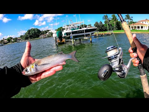 Fishing Live Mullet For Big Saltwater Fish