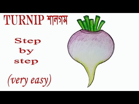 How to draw a Turnip step by step (very easy)