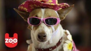 Dog Fashion Show In New York