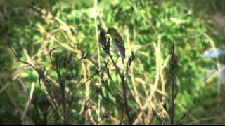 Riverlands Migratory Bird Sanctuary: A Spectacle of Birds