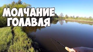 Ловили голавля, а поймали щуку. Береговая рыбалка на реке. Рыбалка в Беларуси.