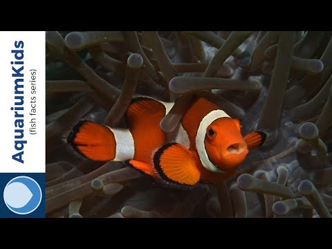 10 Facts About Clownfish (4K UHD)