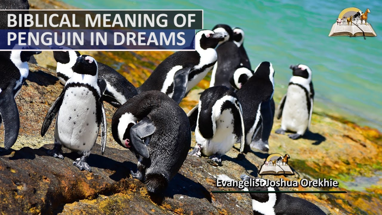 Biblical Meaning of PENGUIN in Dream - Dreaming About Penguins