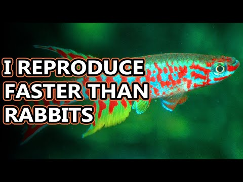 Killifish Facts: The Fish Who Can Live The Longest Outside Of The Water | Animal Fact Files