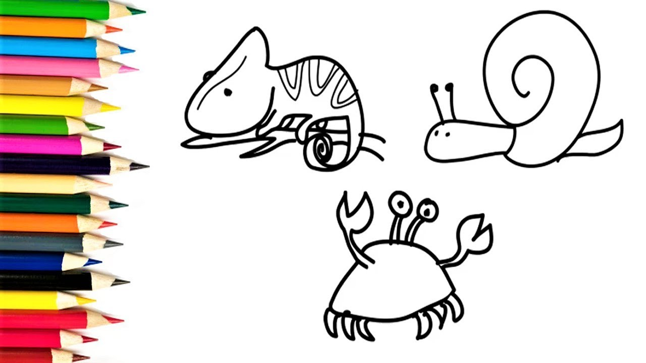 How to Draw Lizard, Snail and Crab   Kids Learn Drawing Animals ...