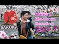 Cherry Blossom Season (Hanami) Japan 2019 in hindi