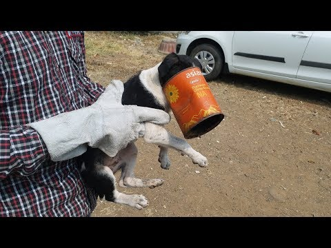 Puppy Rescue Head Stuck In Tin   SHARAN FOR ANIMALS   Animal Rescue India