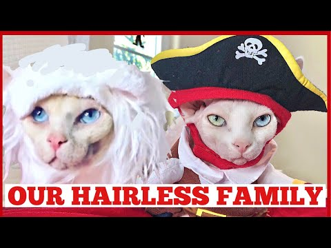 Our Hairless Cats! | Funny Pet Costumes | Halloween 2018| Quinn Sisters