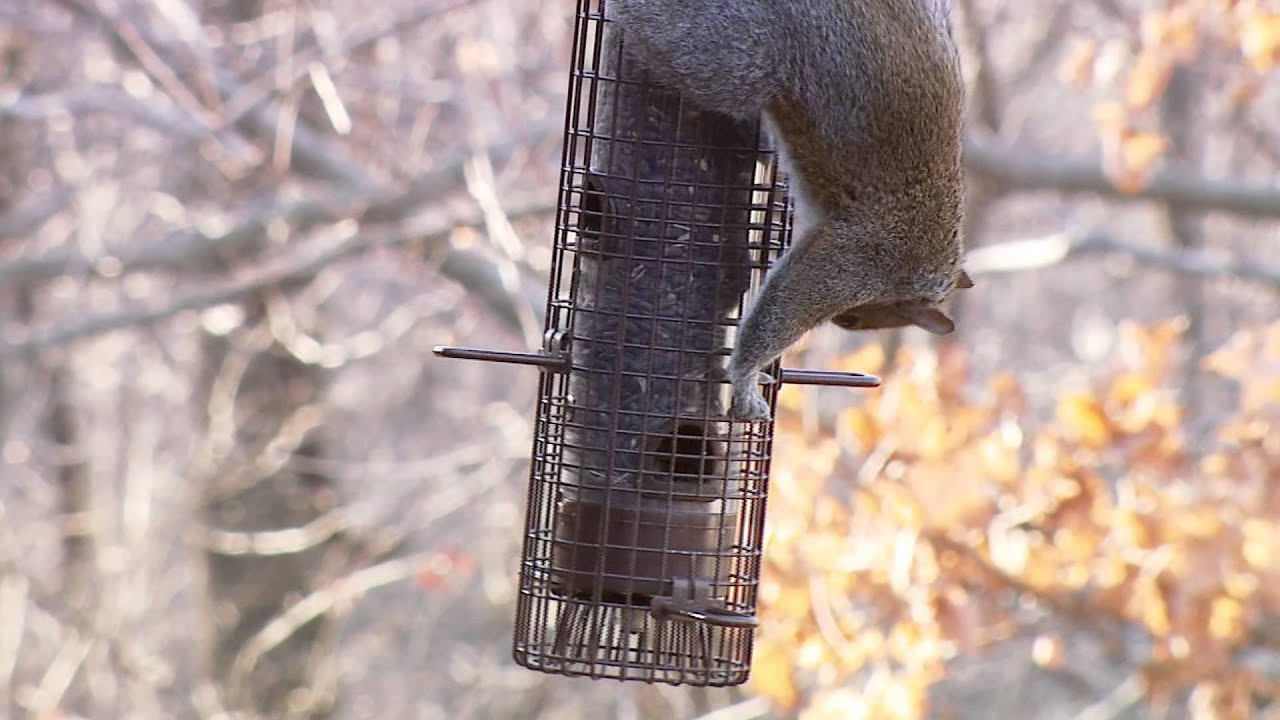proof feeders feeder brome cages bird wild squirrel