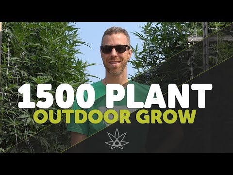 Tour a 1,500 Plant Outdoor Legal Cannabis Farm - Leap Farms Oregon