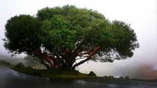 Adam F - The Tree knows Everything