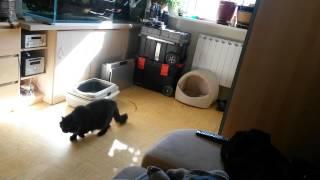 Кот крадется мимо собаки убийцы :) (3 недели знакомства собаки с котом)