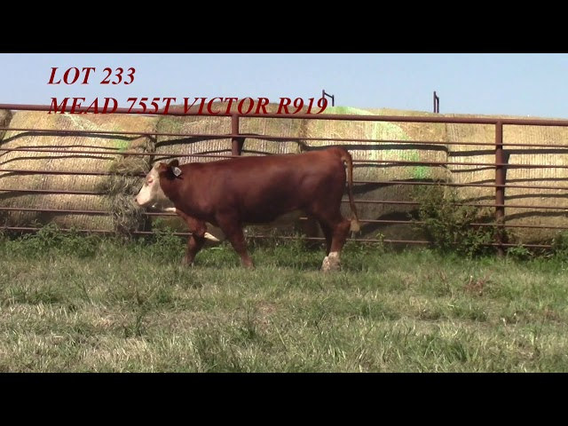Mead Angus Lot 233