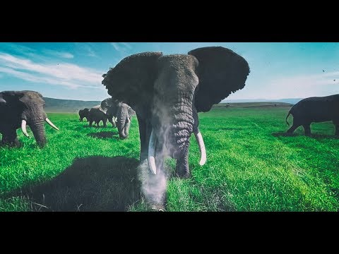 Generate Surrounded by Wild Elephants in 4k 360 Images