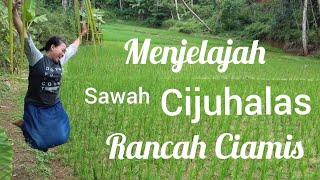 Download Video Alam Pedesaan Sawah Cijuhalas | Cileungsir Rancah Ciamis MP3 3GP MP4