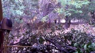 mountain lion stalks unsuspecting bow hunter