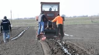 Paulownia instaling Mulching foil and drop irrigation on Ciuperceni Romania.