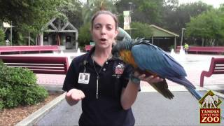 Macaw training at the Zoo
