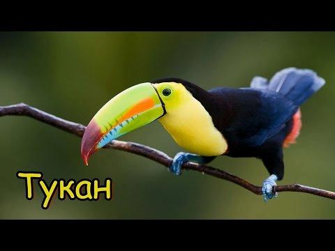 Голоса и звуки животных Южной Америки