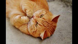 Le chat de Vivaldi - Jacky Galou