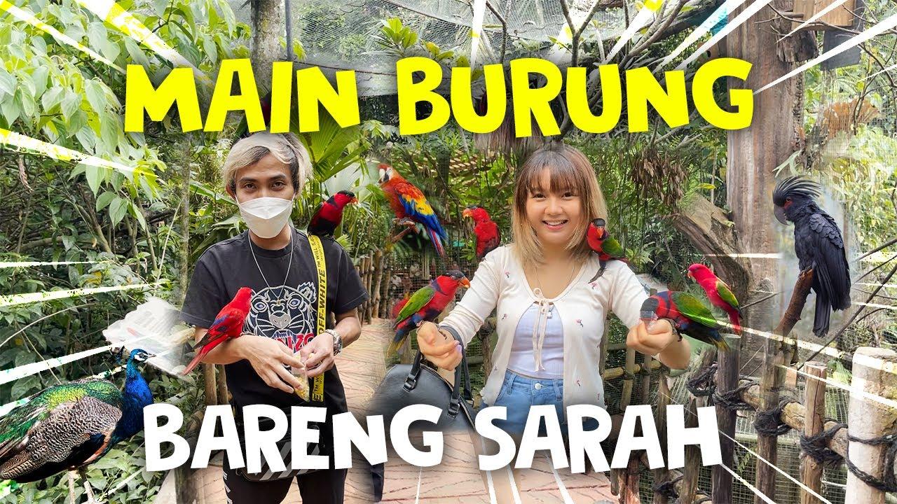 MAIN BURUNG BARENG SARAH !! #KRISWANTOARIVLOG