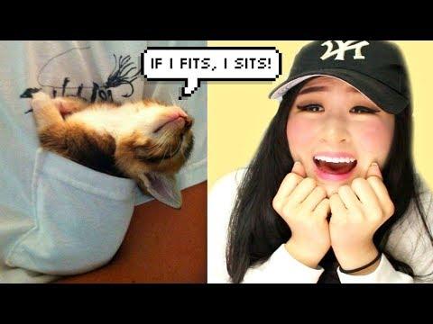 Times Cats Said 'IF I FITS, I SITS!