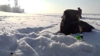 Зимняя рыбалка и наглые собаки!!!