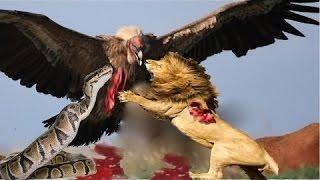 Дикие животные атаки#1  ❇ Павианов Сохранить олень От леопард ГиенаПомощь олень