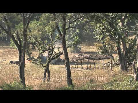 Rajaji national park area, Uttarakhand