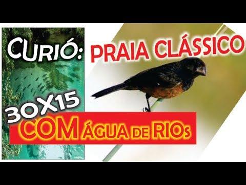 #13 Curió Olho D'Água Canto Praia Grande Super Clássico Sequência De Repetição 30x15 De água De Rio