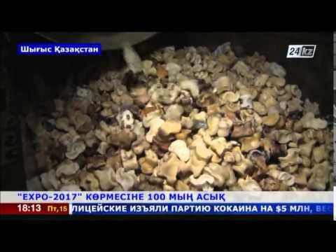 Шығысқазақстандық азамат «ЕХРО-2017»