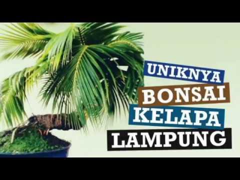Uniknya Bonsai Kelapa Lampung Part 1 By Haluan Indonesia Televisi