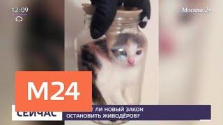 Смотреть видео Поможет ли новый закон остановить живодеров - Москва 24 онлайн