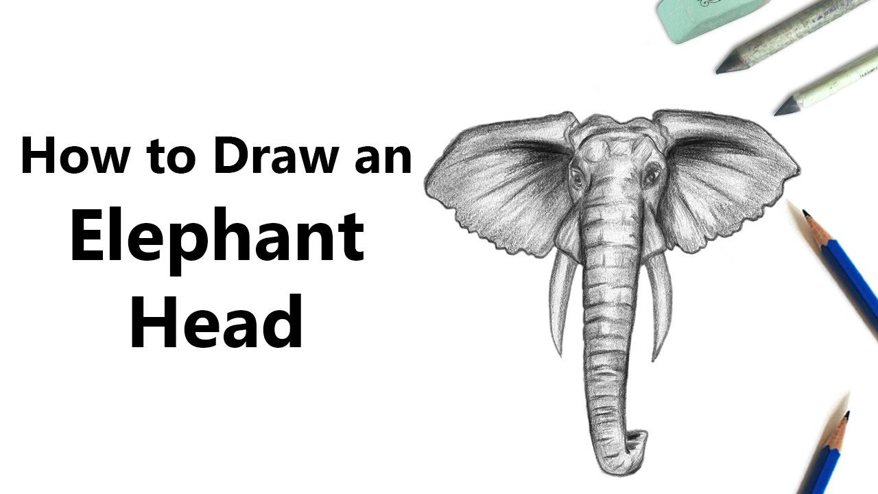 How To Draw An Elephant Head With Pencils Time Lapse