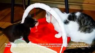 Котята в приюте радуются новой игрушке и много счастья позитива и смеха ;-) funny animals