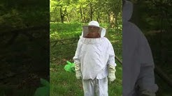 Bee removal north Essex pest control