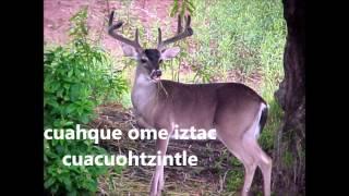"""Canción Nahuatl YULCATONTLI """"El animalito"""""""