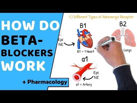 How Do Beta Blockers Work? (+ Pharmacology)
