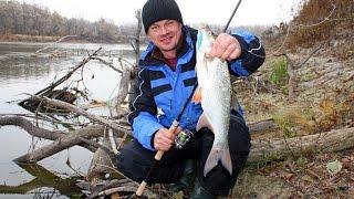 Рыбалка на реке Десна. Осенние зарисовки сезона 2015(Три незабываемых дня на любимой реке - Десна. ловля жереха и голавля на колебалку