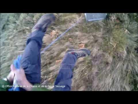 Download Top Channel/ Një javë luftë me ariun, policia shpëton burrin e sfilitur!