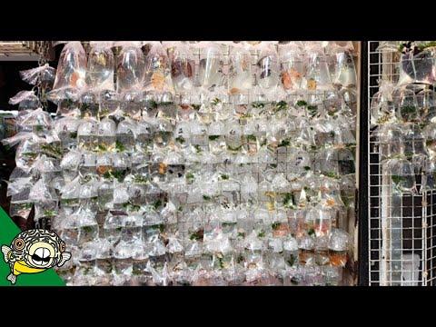 hong-kong-aquarium-fish-street-market