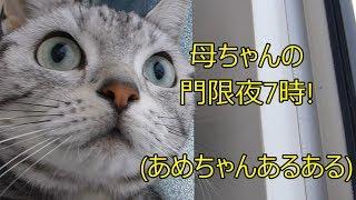 深夜の帰宅…仁王立ちで待ち構えていた猫 ~反省するまで拷問は続く -Strict cat ,My curfew is 7pm