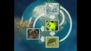 The Carbon Cycle GCSE Science Revision